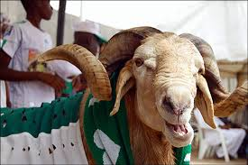 Sallah Picture